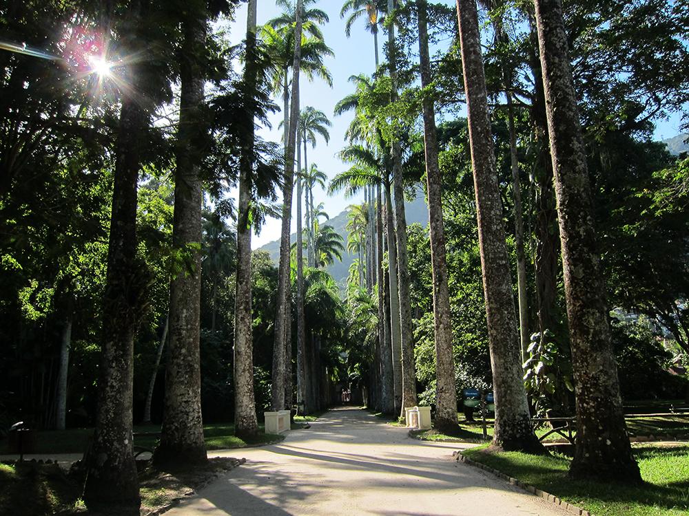 Rio Palm Trees