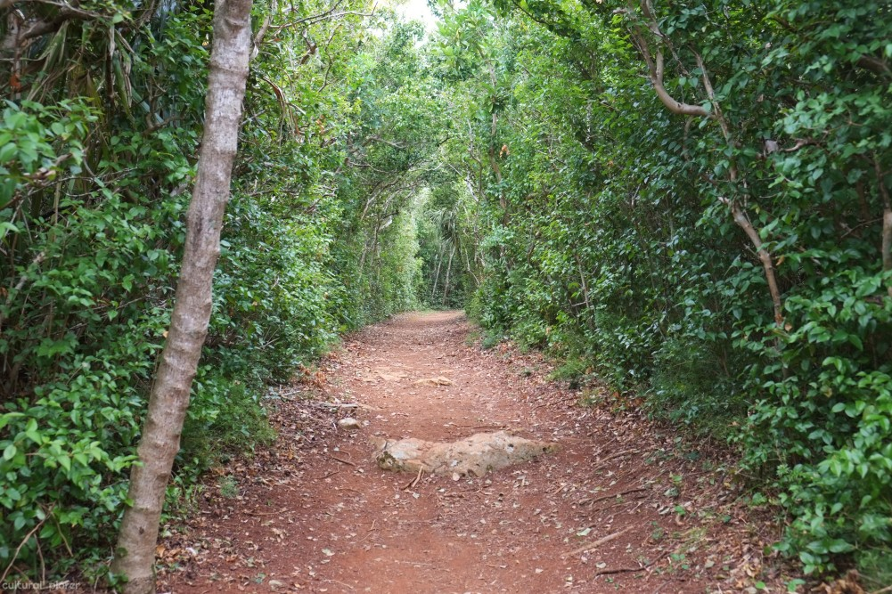 Tom Moores Jungle Bermuda